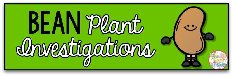 how to grow a lima bean plant