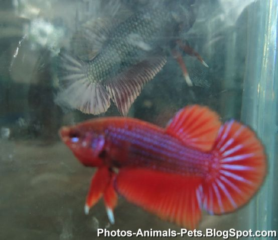 http://2.bp.blogspot.com/-DftjzMMfa2I/TZs4MCdriWI/AAAAAAAAAa0/V8jlqKRoW_s/s1600/fish+images+_0017.jpg