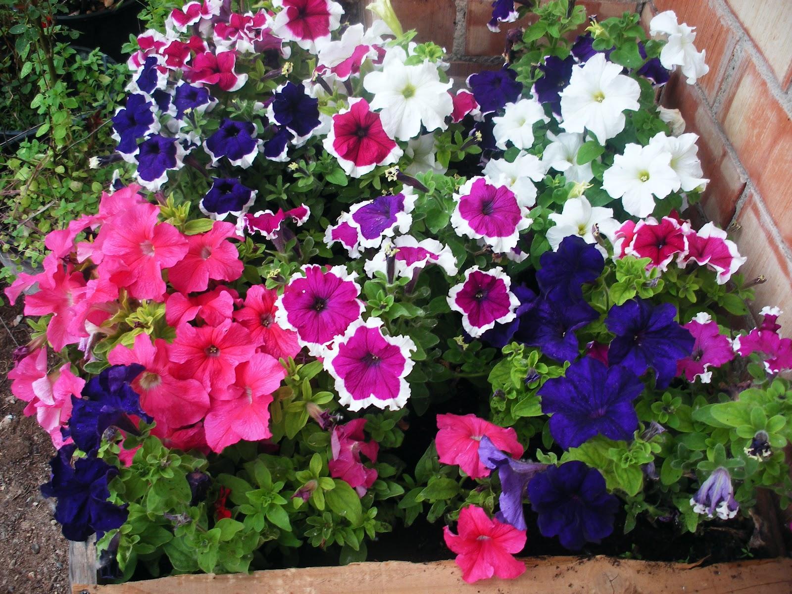 Naturaleza bella las flores for Clases de plantas ornamentales