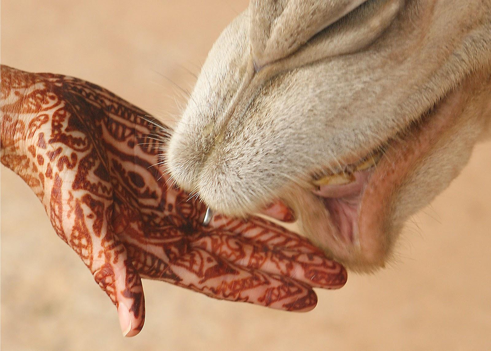 это тату на арабском с переводом Тату надписи - тату на арабском с переводом фото