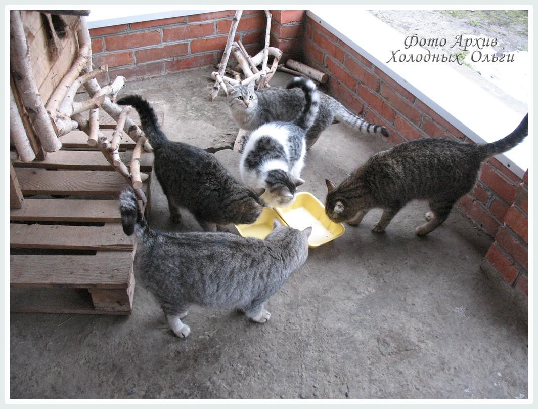 орава кошек
