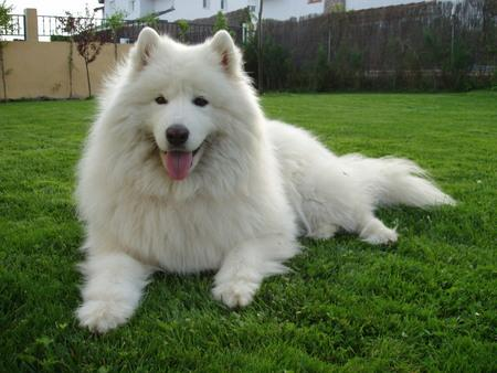 Pets information you and your dog s weight