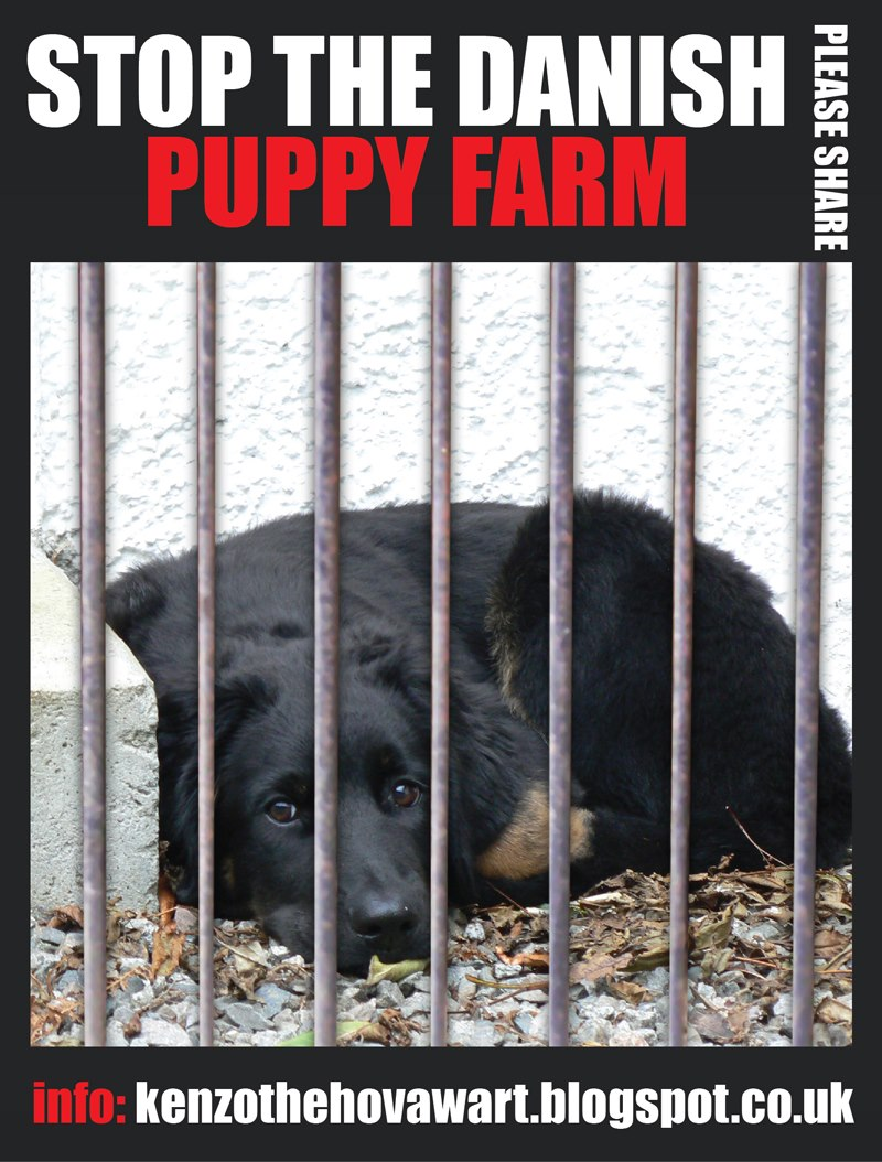 puppy mills research paper