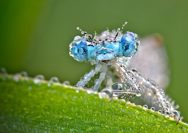 macrofotografía de insecto mojado