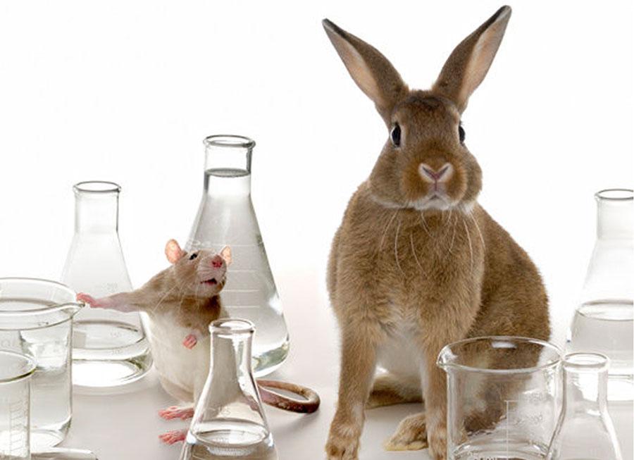 50 Conseqüências Fatais de Experimentos com Animais
