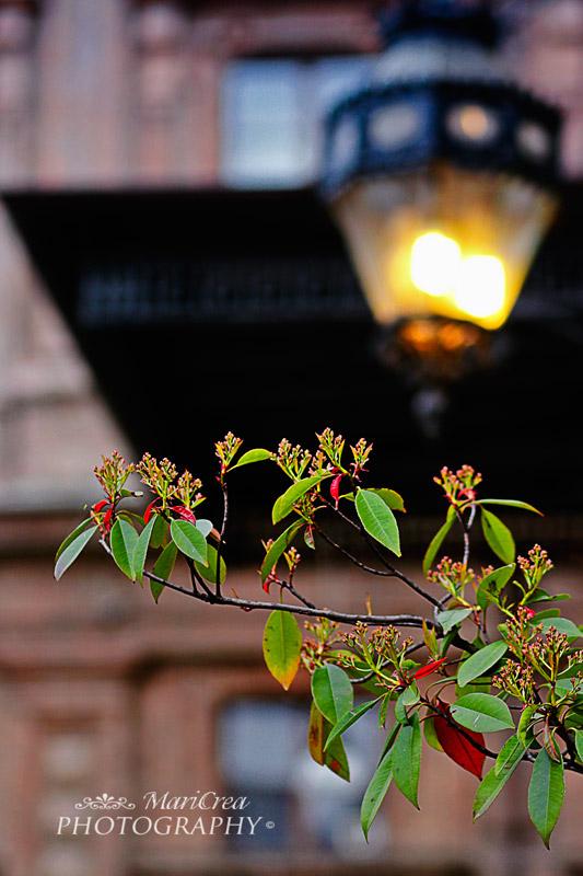Lanterna di pepino