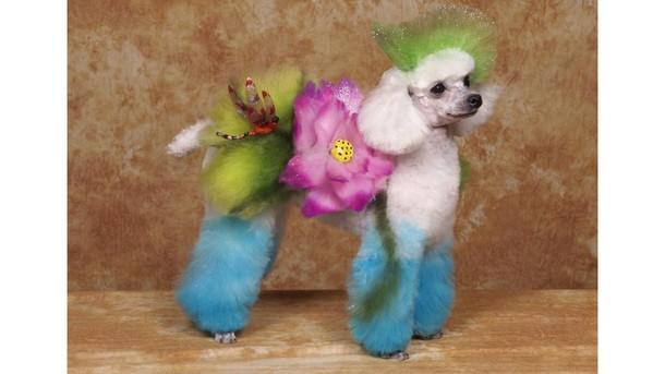 creative dog designs
