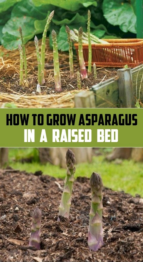 How To Get Rid Of A Bed Of Asparagus