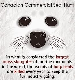 Animal cruelty statistics around the world