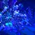 Underlight Canyon -Vashj'ir
