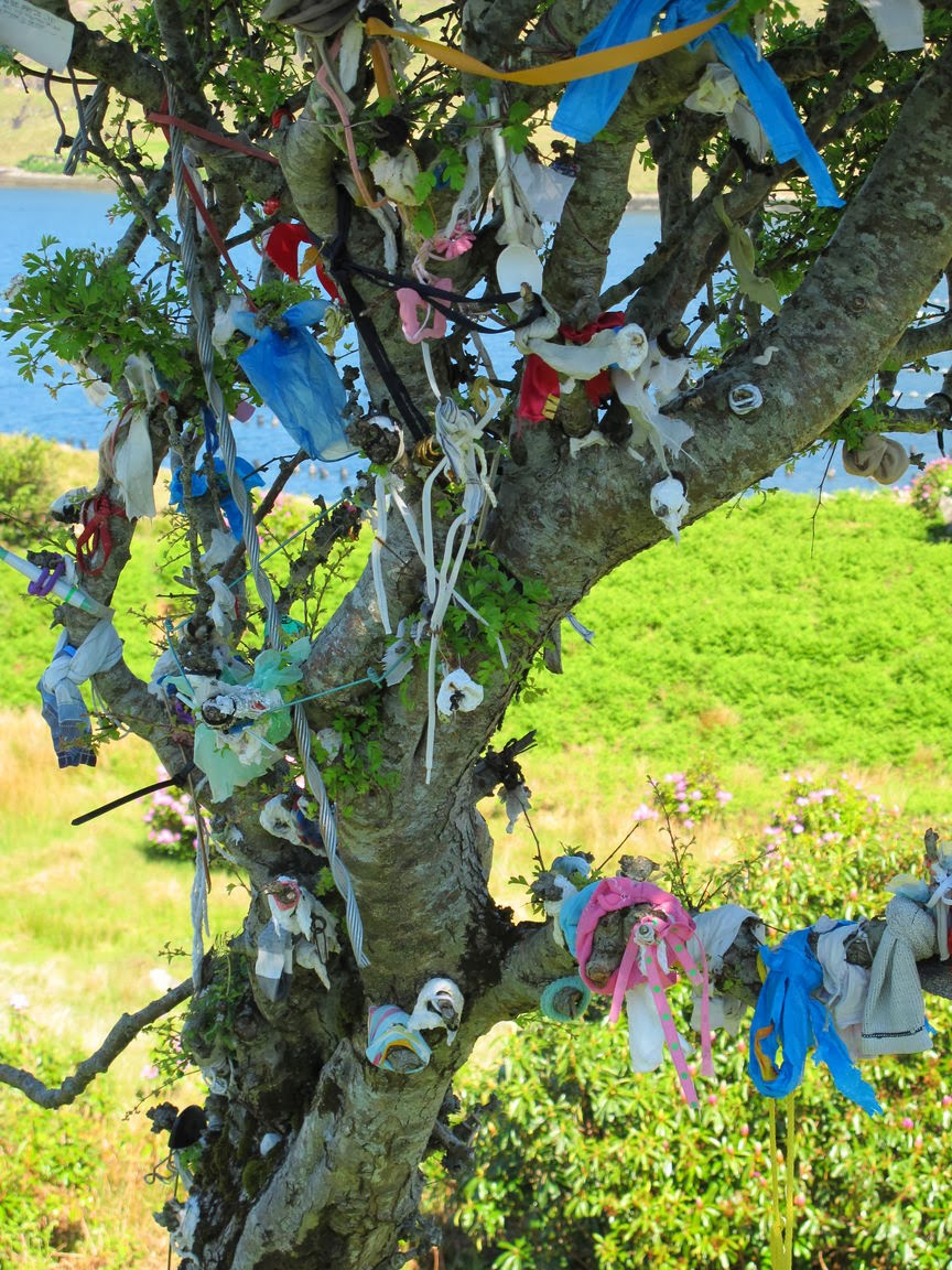 The dance of life: oak & ash & thorn the faerie trees