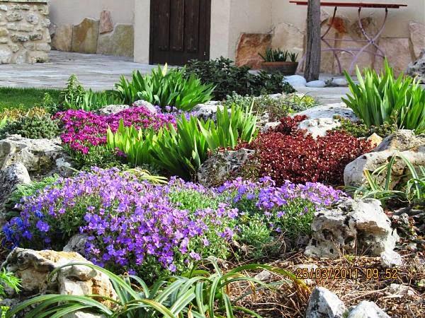 Arte y jardiner a plantas bulbosas para jardines de rocalla for Arbustos enanos para jardin
