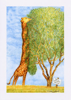 Giraffe Greeting Cards by UK Artist Ingrid Sylvestre - Giraffe Eating Wiggy Willow