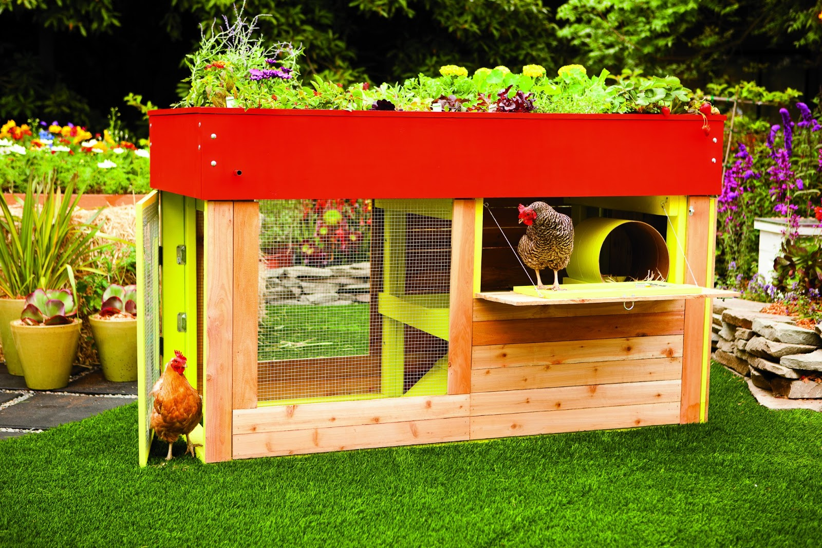 Book review reinventing the chicken coop community chickens for Chicken coop for 2 chickens