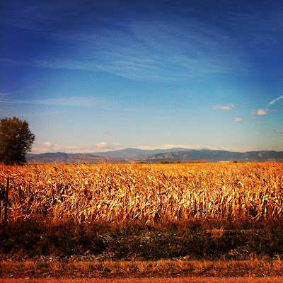 Northern Colorado Corn Maze, Fort Collins - Timnath Colorado www.thebrighterwriter.blogspot.com