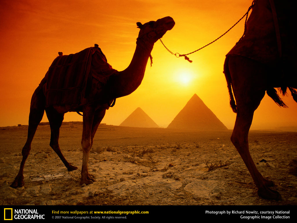 http://2.bp.blogspot.com/-DkZrTix9gFU/TV6l2v8u2fI/AAAAAAAAAAk/JWBlAqsiO70/s1600/Camels-and-Pyramids-Wallpaper-egypt-773002_1024_768.jpg