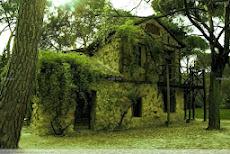 En la casa del bosque