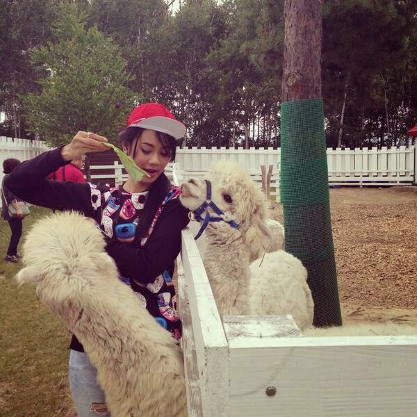Amanda Zevannya dengan Alpaca di Japan
