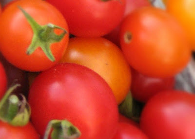 Bahaya Makan Tomat