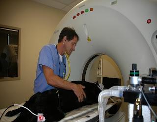 tomografia em cães