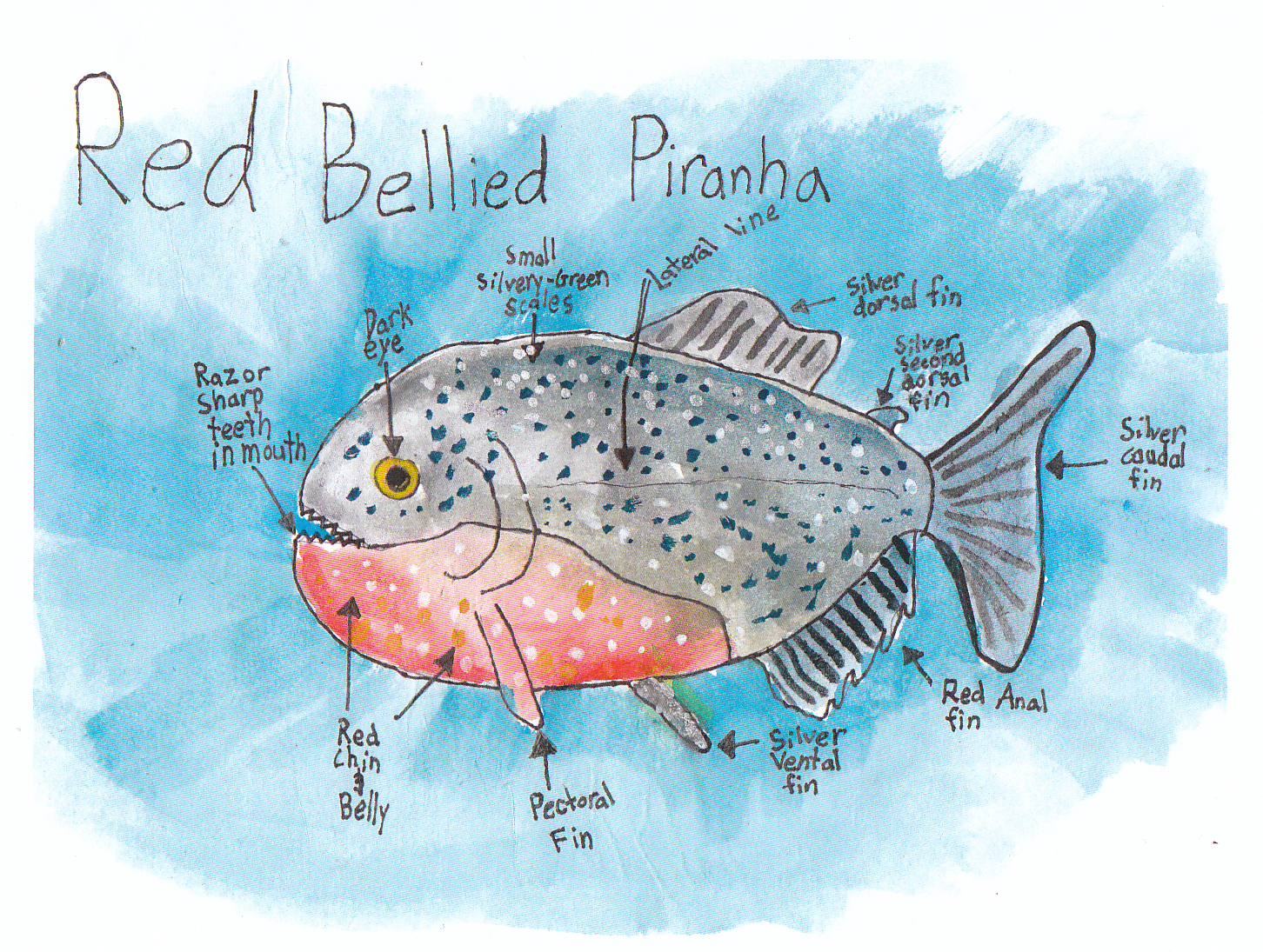 a biome report on piranha Report violators - wildlife alert  the freshwater fish you're looking for may be a nonnative species  piranha nonnatives spotted tilapia.