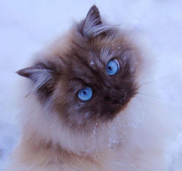 foto-foto kucing lucu