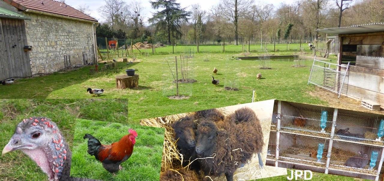 Activitypedia o voir des animaux gratuitement paris for Jardin animaux paris