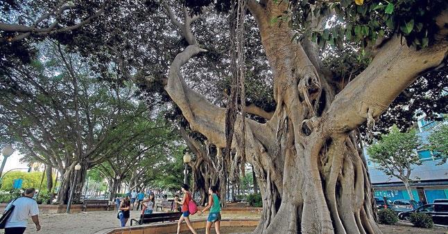 Las parques y zonas ajardinadas de Alicante