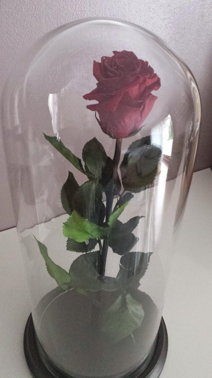 Comme je vous le disais dans un article précédemment publié, pour la  Saint,Valentin j\u0027ai eu une rose éternelle. C\u0027est à dire une fleur qui ne  fane pas.