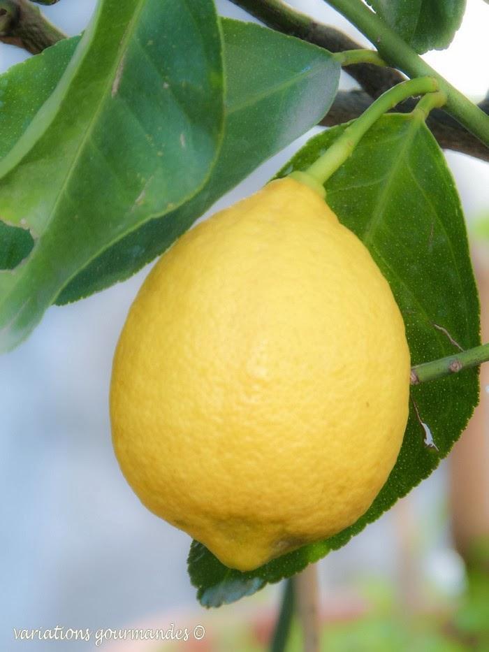 Variations gourmandes la confiture de citron du pays - Confiture de nefles du japon ...