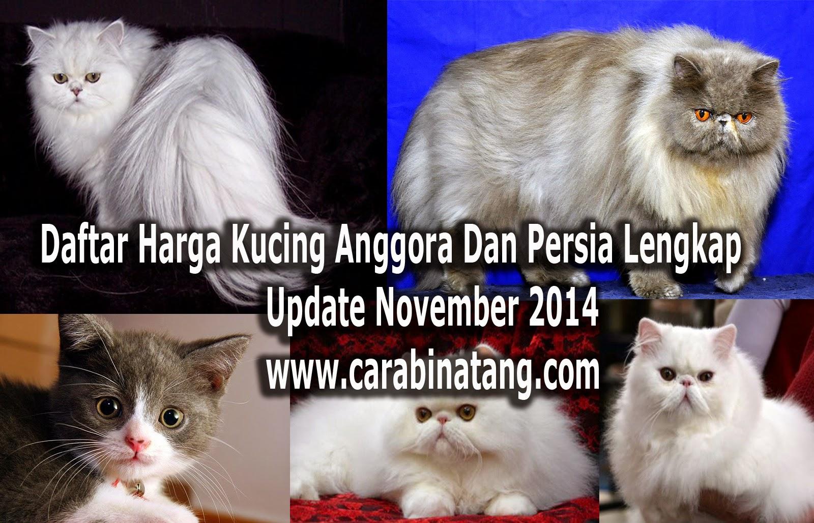 Harga Kucing Anggora dan Persia (Update November 2014)