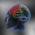 Cara Regenerasi Sel Otak