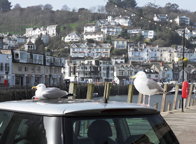 Looe River Cornwall and seagulls