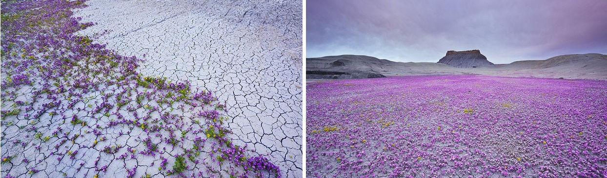 Escrevendo à Deus A Flor Que Brota No Deserto