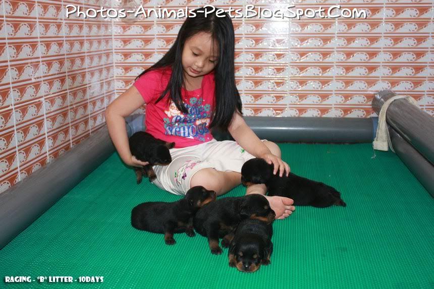 http://2.bp.blogspot.com/-Dnimlj4o2KU/TbgA-X_2ehI/AAAAAAAAA1Y/WZplWBrle7c/s1600/Cute%2BRottweiler_0002.jpg