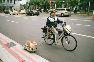 Funny picture: Chinese on the bike let the dog out on skateboard