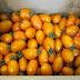 [團購] 橙蜜香小番茄。美濃特產果肉飽滿金黃小番茄
