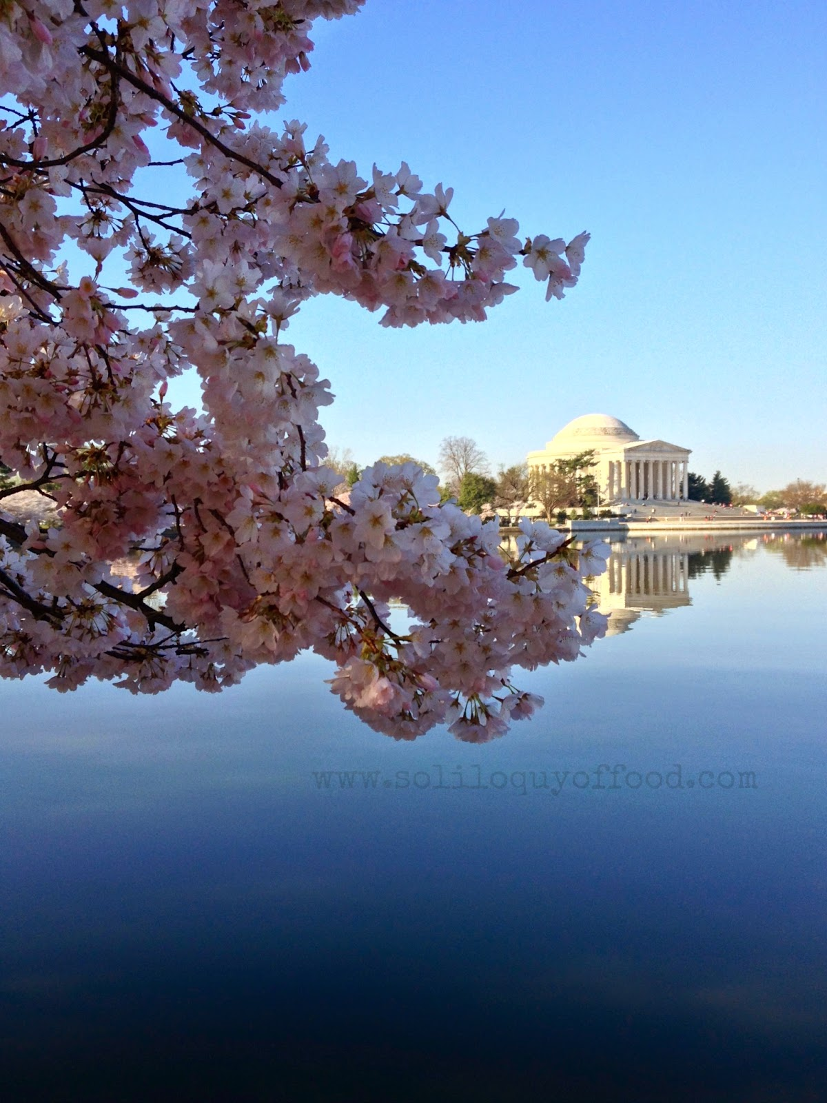 The Jefferson Memorial from across the Tidal Basin - Cherry Blossoms 2014, Washington, DC - www.soliloquyoffood.com