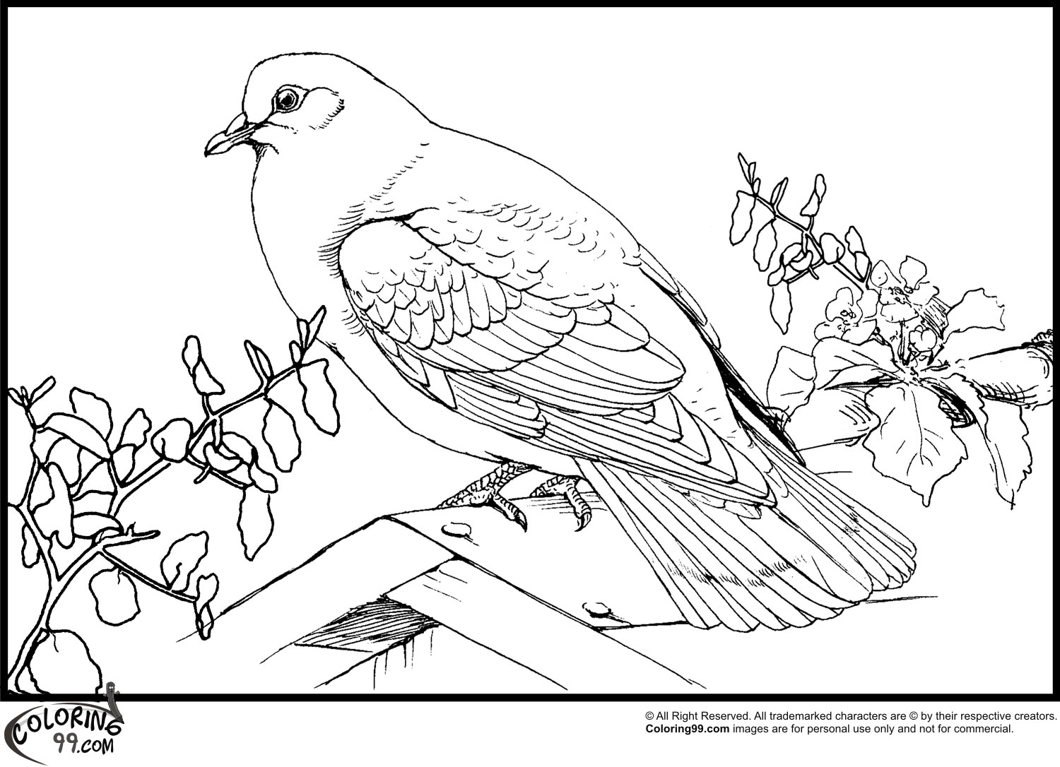 Dove coloring pages team colors for Coloring pages pigeon