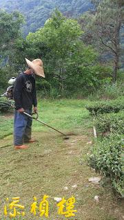 採用人工除草,沒有噴除草劑