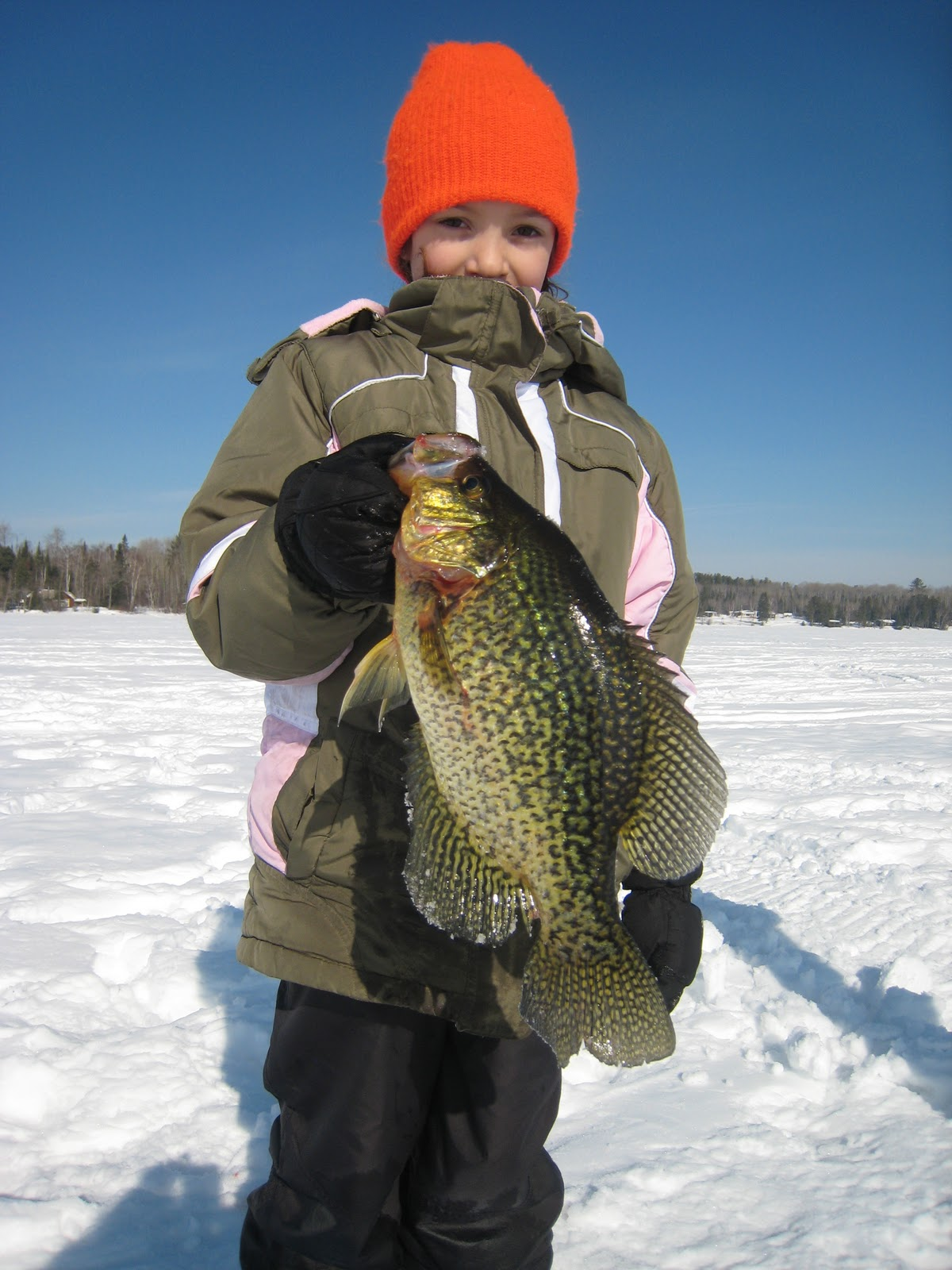 Ontario 39 s sunset country tips for crappie fishing in for Crappie ice fishing