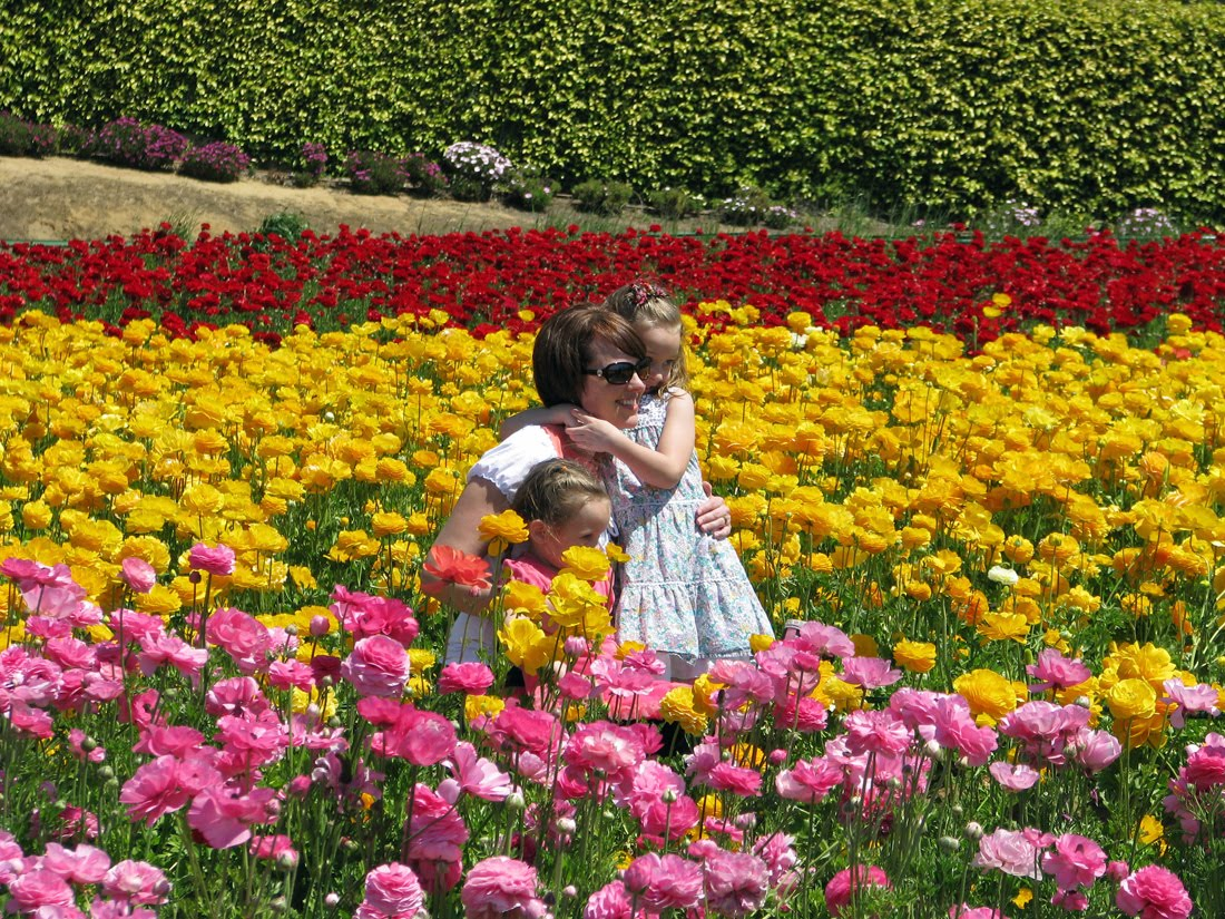 The Bell Curve of Life Carlsbad Flower Fields The People