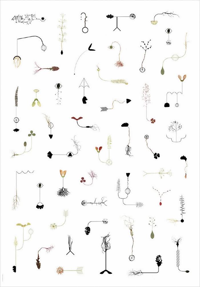 ilustraciones con plantas y flores de Lotta Olsson