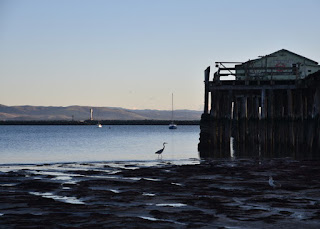 Heron silhouetted at low tide near a pier at Mavericks Beach, Princeton-by-the-Sea, California