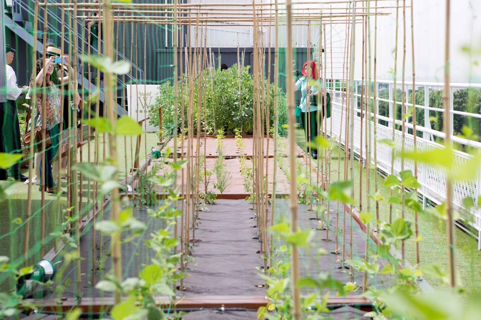 Huerto urbano en casa natural y ecol gico for Huerto en azotea