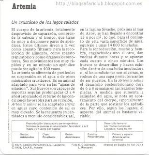 Blog Safari Club, características de la Artemia, un crustáceo de los lagos salados