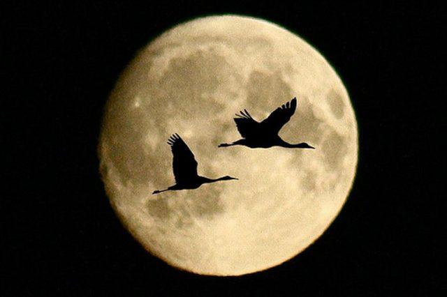 القمر ... كما لم ترآه من قبل .. رااائع  Stunning-photos-of-moon-07