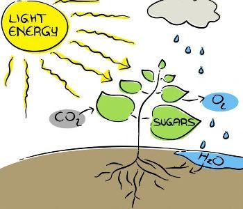 Contoh Explanation Text Photosynthesis Process Teks Dalam Bahasa