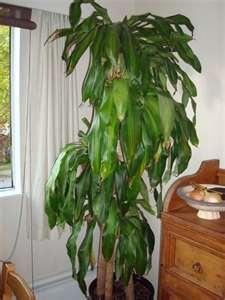Bisarbeat Selection Of Beautiful Indoor Plants