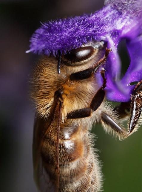 http://lafamiliapicola.blogspot.com/2015/11/imagenes-apicolas-variadas-honey.html